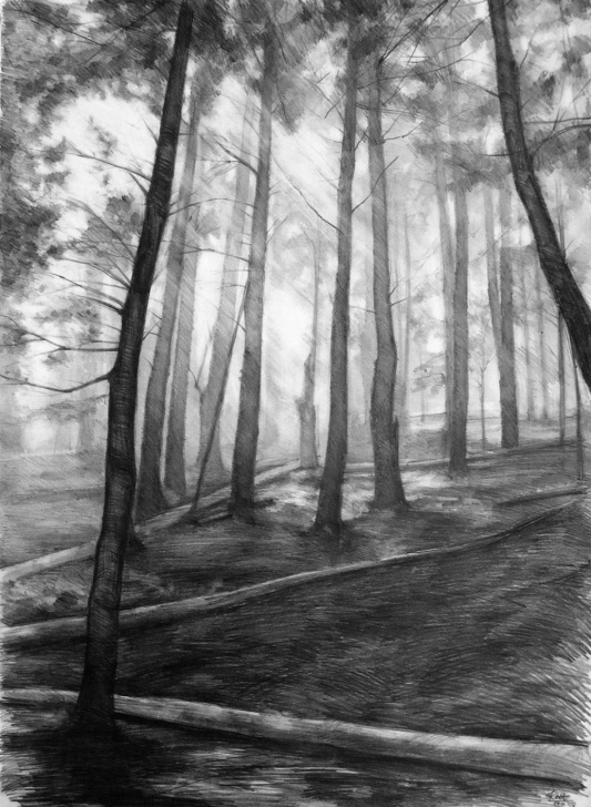 Stunning Dark Pencil Sketches Ideas Dark Forest Original Drawing By Katarzyna Kmiecik / Pencil Sketch Photo