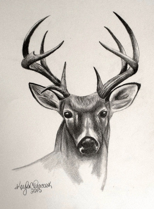 Stunning Deer Pencil Drawings Simple Deer Sketches - Bing Images | Deer Sketches | Pencil Drawings Images