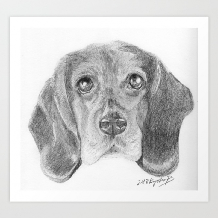 Stunning Dog Pencil Sketch Techniques for Beginners Beagle Dog Face Realistic Pencil Sketch Drawing Art Print Images