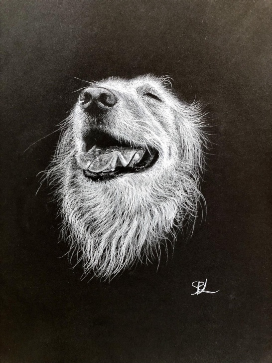 Stunning Drawing On Black Paper With White Pencil Tutorial Doggie Smile, Drawn For Redditor :), White Pencil On Black Paper Photo