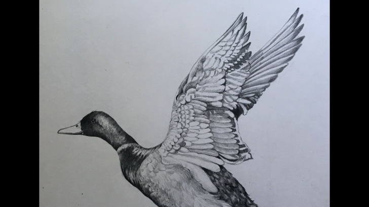 Stunning Duck Pencil Sketch Tutorial Draw And Shade A Duck In Pencil | Pencil Sketch | Duck Drawing Step By Step Photo