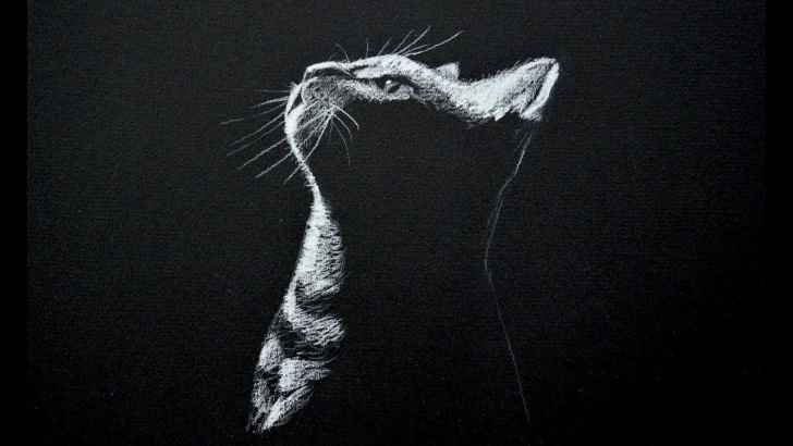 Stunning Easy Drawing On Black Paper With White Pencil Techniques Drawing A Cat - White On Black Paper - Time Lapse Photo