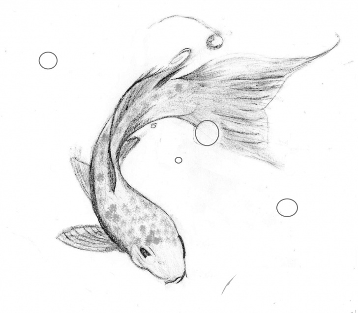 Stunning Fish Pencil Sketch Easy Koi Fish Pencil Sketch And Fish Pencil Sketch Pencil Drawing Of Fish Pic