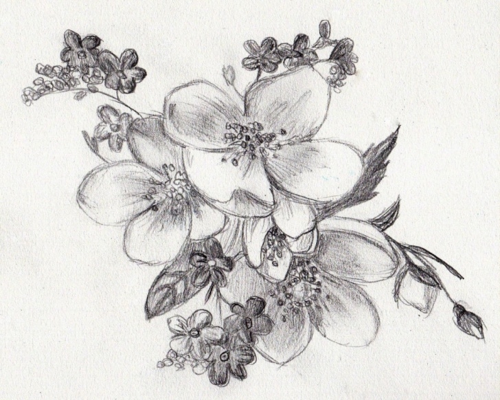 Stunning Flower Drawing With Pencil Tutorial Pencil Sketch Images Flowers At Paintingvalley | Explore Pictures