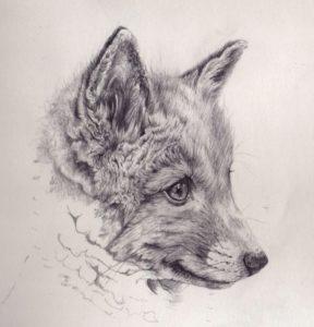 Stunning Fox Pencil Drawing Simple Cool Fox Drawings   Fox Cub Mechanical Pencil Drawing By Akdizzle Pics