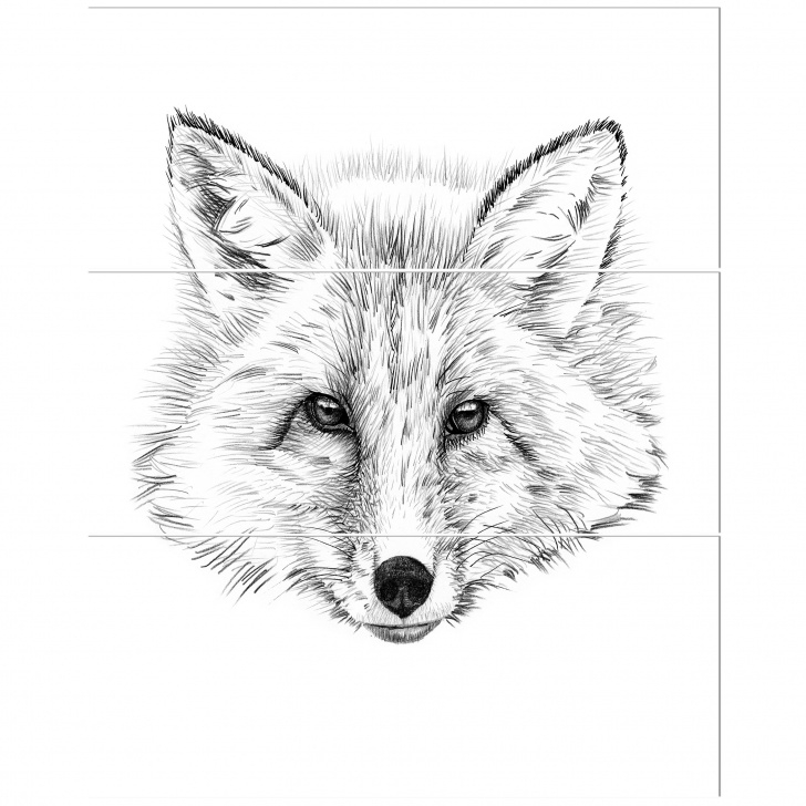 Stunning Fox Pencil Sketch for Beginners 'pencil Fox Sketch In Black And White' Drawing Print Multi-Piece Image On  Canvas Pics
