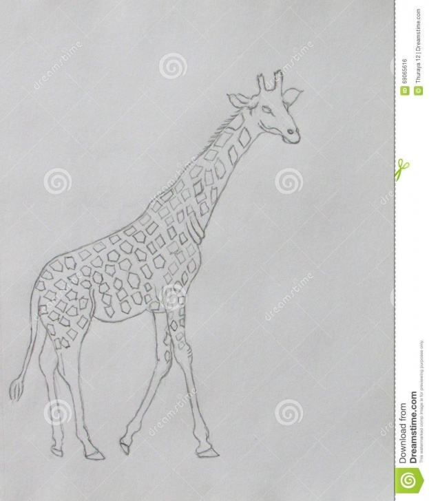 Stunning Giraffe Pencil Sketch Ideas Coloring Book Of Giraffe Stock Illustration. Illustration Of Drawing Photos