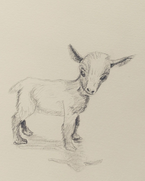 Stunning Goat Pencil Drawing Lessons Baby Goat. Pencil In My Sketchbook. | Jalbert Watercolors Drawings Pictures