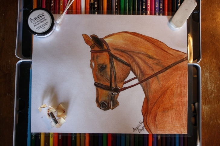 Stunning Horse Drawing Colored Pencil Easy Sorrel Horse Oil Based Colored Pencil Drawing | Art From The Heart Pics