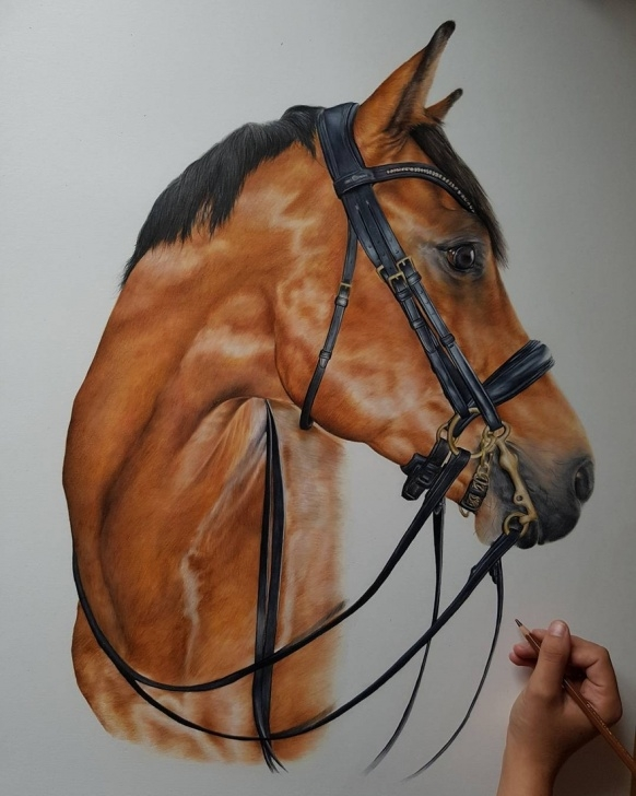 Stunning Horse Drawing Colored Pencil Lessons Design Stack: A Blog About Art, Design And Architecture: Colored Pics