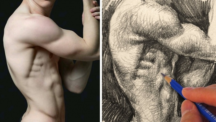 Stunning Human Body Pencil Drawing Easy How To Draw The Human Body With Pencil - Torso Images
