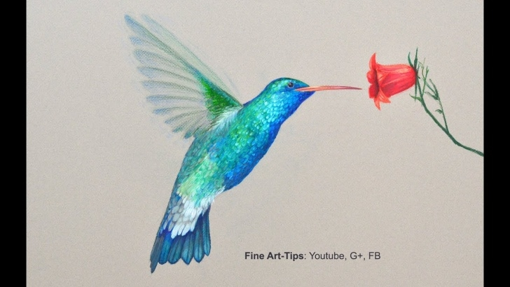 Stunning Hummingbird Drawings In Pencil Ideas How To Draw A Hummingbird - Drawing With Color Pencils Image