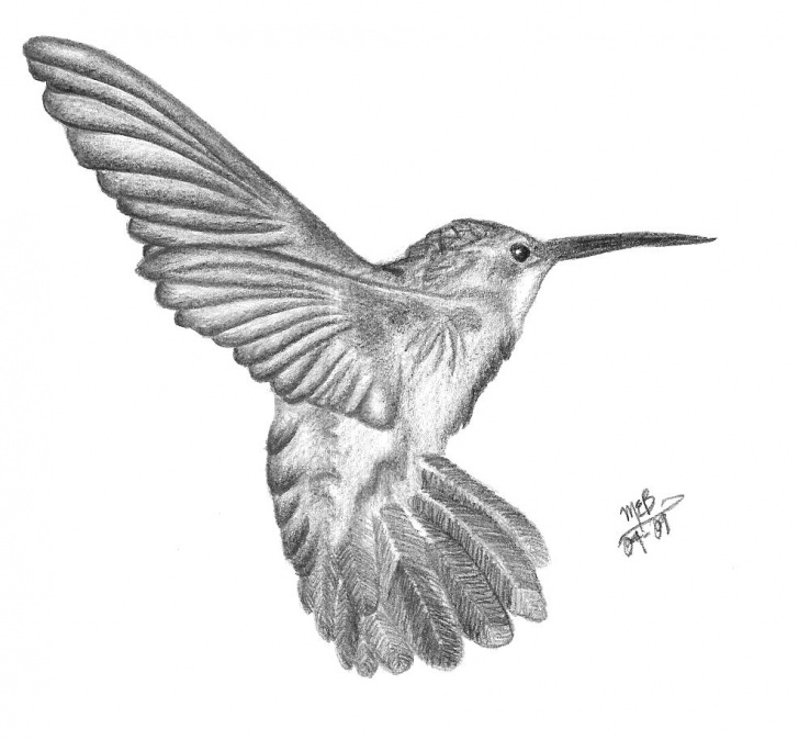 Hummingbird Drawings In Pencil