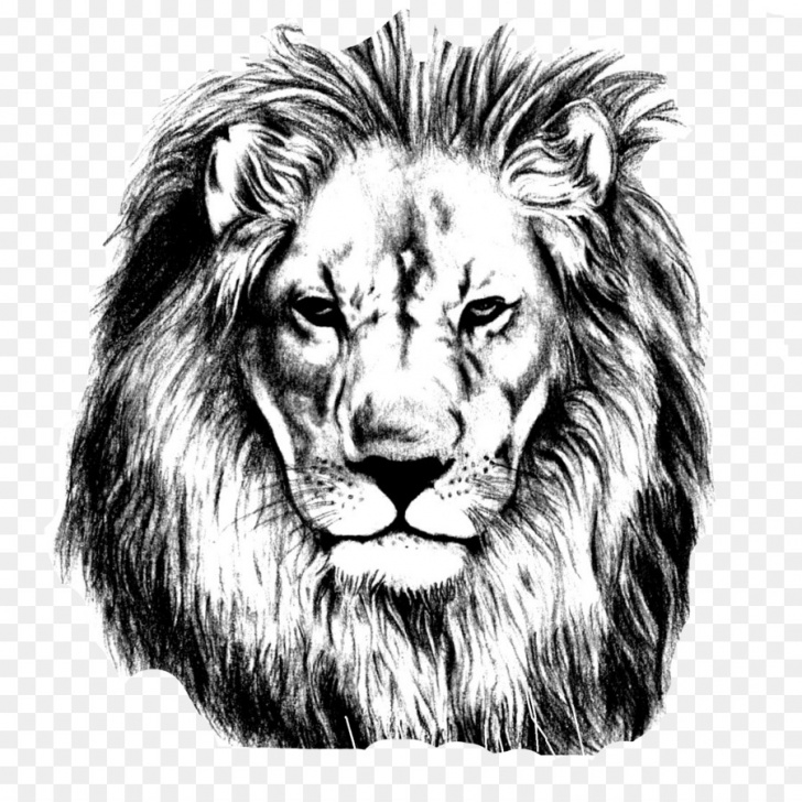 Stunning Lion Face Pencil Drawing Courses Lion Drawing Png Download - 1669*1643 - Free Transparent Lion Png Images
