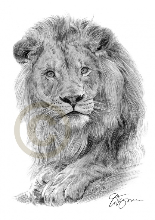 Stunning Lion Pencil Drawing Free Pencil Drawing Of A Lion By Artist Gary Tymon Photos