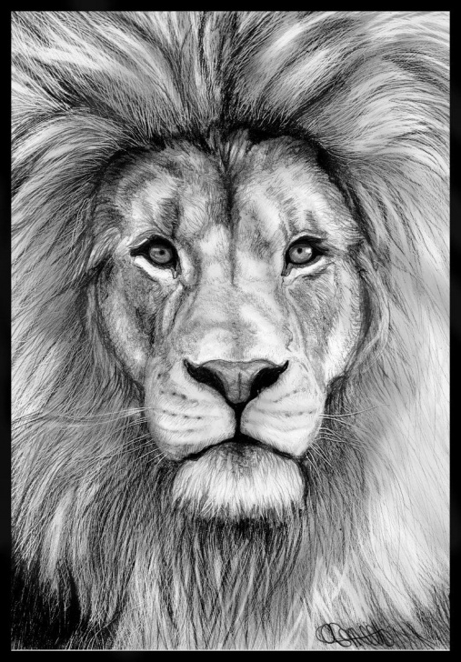Stunning Lion Pencil Sketch Simple Izu The Lion. | Tattos | Pencil Drawings Of Animals, Lion Art Pictures