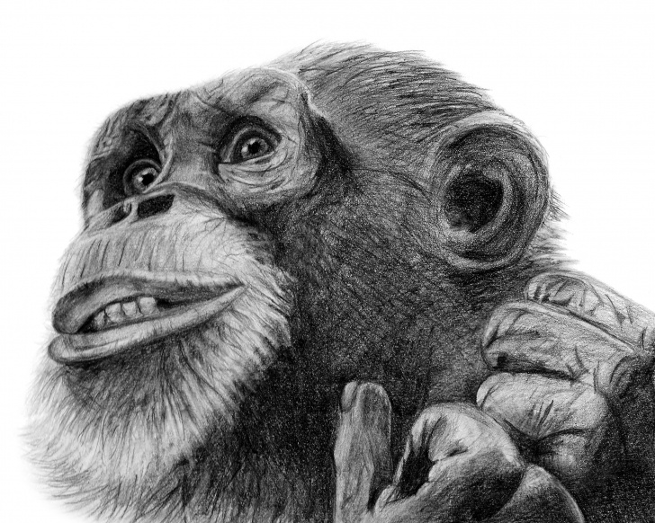 Stunning Monkey Pencil Drawing Easy Monkey Pencil Drawing Print | Monkey Illustration | Animal Drawing | Animal  Illustration | Digital Print Image