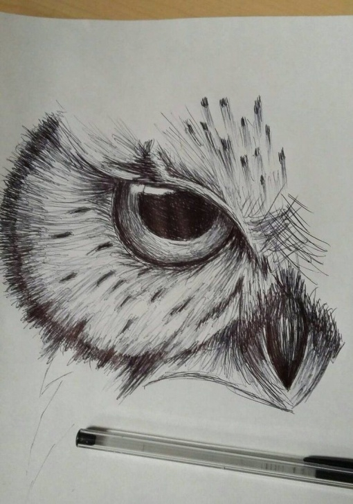Stunning Owl Pencil Sketch Techniques Pencil Sketch Of Owl And Owl Sketchcdkingof On Deviantart | Art In Photo