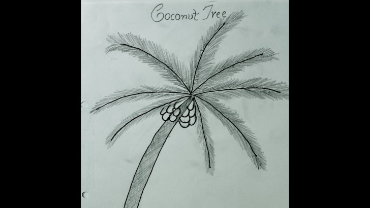 Stunning Palm Tree Pencil Drawing Tutorial How To Draw Coconut Tree !! कोकोनट पेड़ कैसे बनाये !! How To Make Coconut Photo