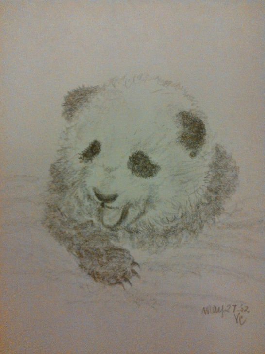 Stunning Panda Pencil Sketch Free Original Pencil Sketch - Panda Bears - Pencil Sketches Pic