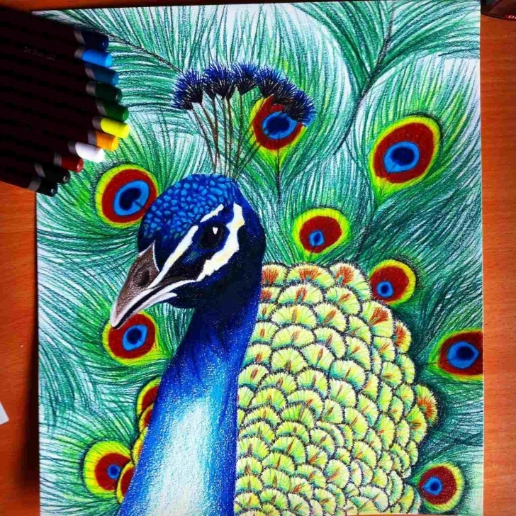 Stunning Peacock Pencil Drawing With Color Easy Pinterest Rhpinterestcom Color Blue Peacock Peacock Drawings With Photo