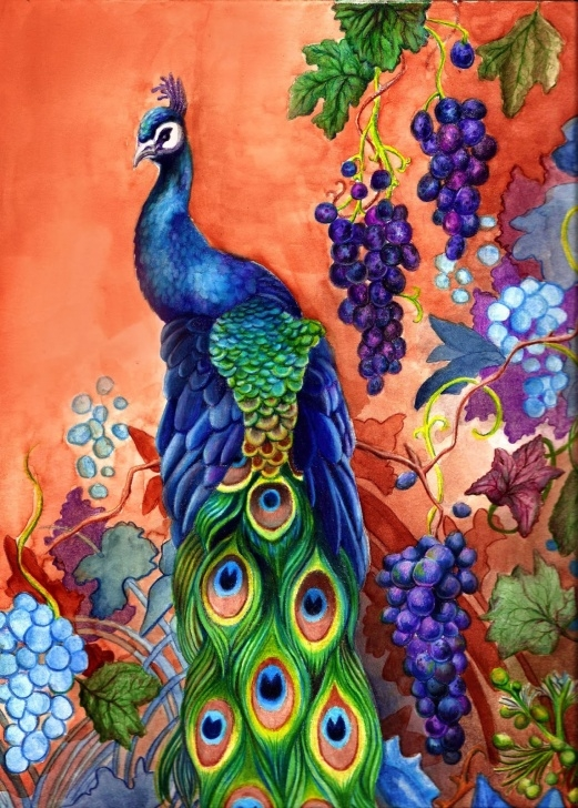 Stunning Peacock Pencil Drawing With Color Step by Step Drawing Picture Of Peacock With Colour - Picture Of Photos