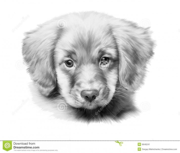 Stunning Pencil Drawings Of Puppies for Beginners Pencil Sketch Of Puppy And Pencil Sketches Of Puppies Pencil Pics