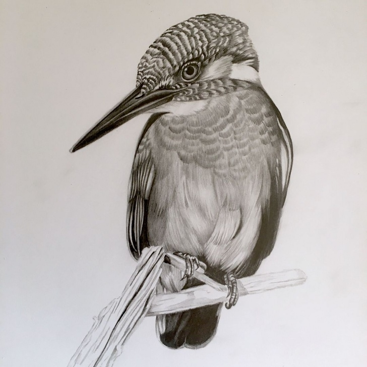 Stunning Pencil Shading Animals Free Common Kingfisher | Animal In 2019 | Pencil Drawings Of Nature, Bird Image