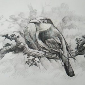 Stunning Pencil Shadings Drawings for Beginners How To Draw A Bird With Pencil | Drawing | Shading Photo