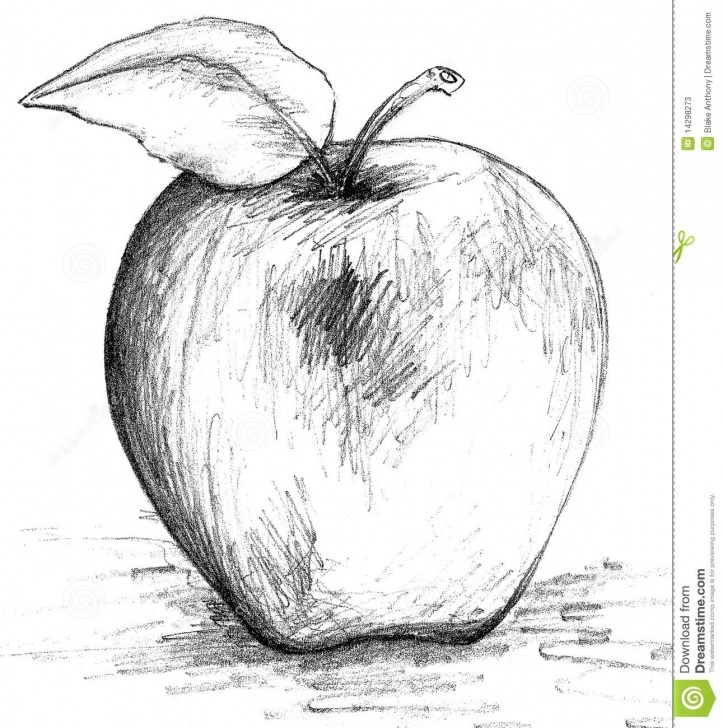 Stunning Pencil Sketch Of Apple Free Illustration About Pencil Drawing Sketch Of An Apple. Illustration Photo