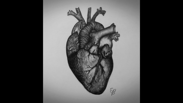 Stunning Pencil Sketch Of Human Heart Courses How To Draw Heart Step By Step Real Heart Drawing Picture