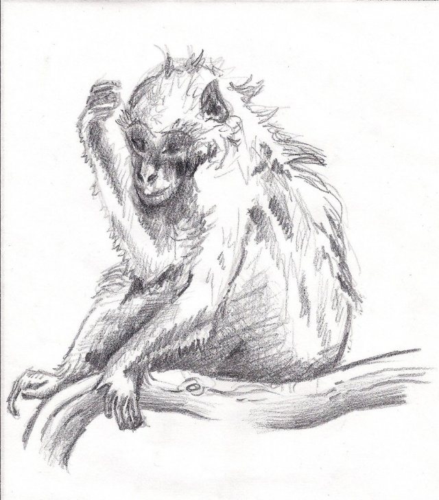 Stunning Pencil Sketch Of Monkey Techniques for Beginners Pencil Sketch Of Monkey And Monkey Pencil Sketch Dreaming Monkey Photos