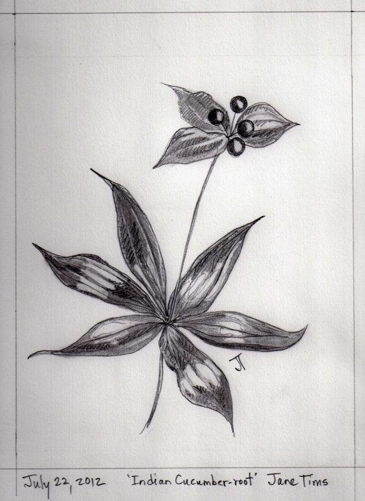 Stunning Plant Pencil Drawing Simple Gallery Of Pencil Drawings Of Wildflowers | Nichepoetryandprose Pics