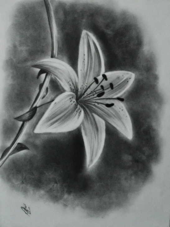 Stunning Pretty Pencil Drawings Step by Step Pencil Sketches Of Flowers At Paintingvalley | Explore Picture