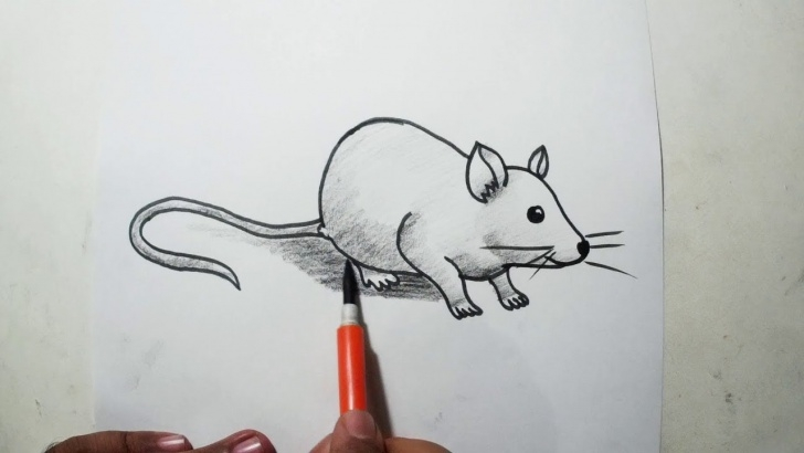 Rat Pencil Drawing