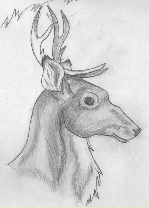 Stunning Reindeer Pencil Drawing Simple Drawing Of A Reindeer - Google Search | White In 2019 | Pencil Image