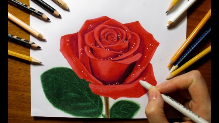 Rose Color Pencil Drawing