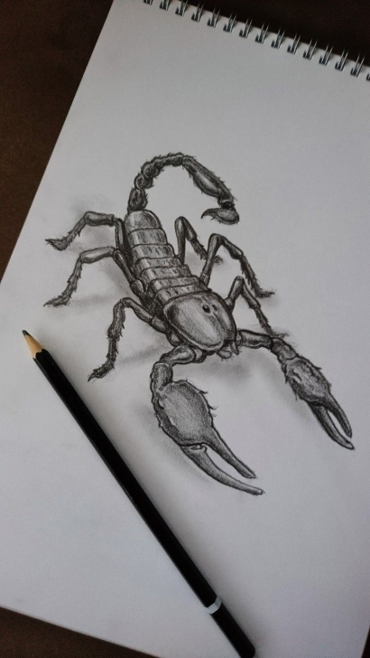 Stunning Scorpion Pencil Drawing Step by Step Pencil Drawing Of Scorpion | Children's Book Illustrations Picture