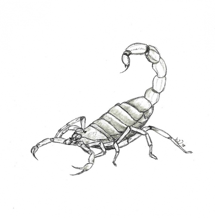 Stunning Scorpion Pencil Drawing Techniques for Beginners 2019的Scorpion - Pencil On Paper. Copyrighted Material. Please Pictures