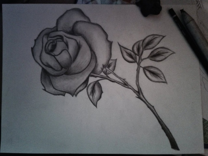 Stunning Simple Pencil Drawings Of Flowers Courses Simple Pencil Drawings Of Flowers And Simple Pencil Sketches Of Images