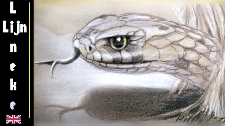 Stunning Snake Drawings In Pencil Free Realistic Snake Drawing In Pastel Pencil - Featuring The Snake Artist Pic