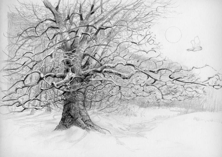 Stunning Tree Pencil Art Tutorial Pencil Drawing Of A Tree Photo To <B>Pencil Sketch</b>, <B>Drawing Pic