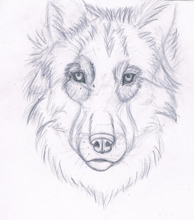 Stunning Wolf Pencil Art Free Wolf Pencil Drawing By Pindapandadraws On Deviantart Photo