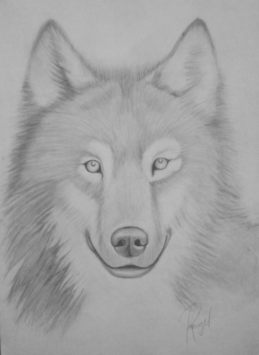 Stunning Wolf Pencil Art Ideas Pencil Drawing Of Wolf — Steemit Pic