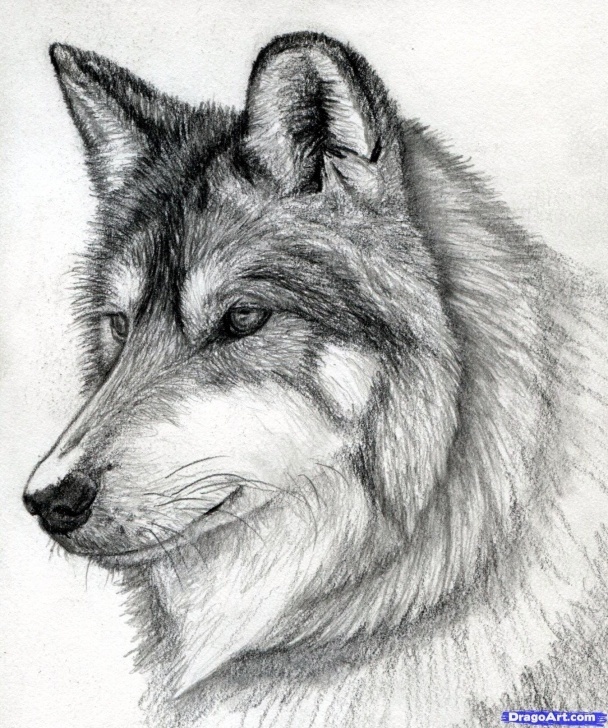Stunning Wolf Pencil Sketch Simple Sketch A Wolf At Paintingvalley | Explore Collection Of Sketch A Pictures