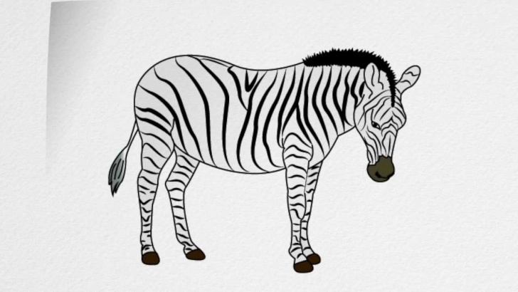 Stunning Zebra Pencil Drawing Tutorials How To Draw A Zebra Step By Step Picture