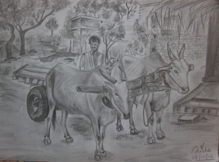 The Best Agriculture Pencil Drawing Tutorials Trisha Alegra, Oxcart Photo