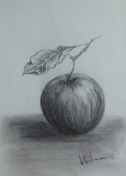 The Best Apple Still Life Drawing Techniques for Beginners $15 Apple With A Leaf, Still Life Sketch. Original Art, Graphite Photo