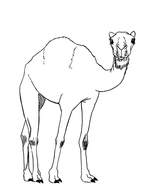 The Best Camel Pencil Sketch for Beginners Camel Drawing, Pencil, Sketch, Colorful, Realistic Art Images Photos