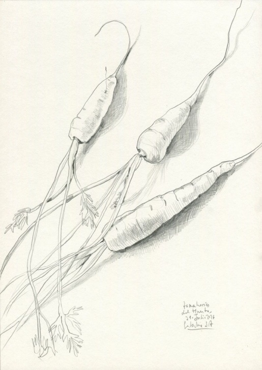 The Best Carrot Pencil Drawing Tutorials Carrots Pencil Drawing - Print Of Carrots Drawing - Veggies Pencil Photo
